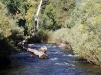 Fly fish the Cimarron River.  New Mexico fly fishing in Eagle Nest